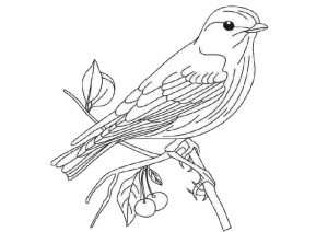 Easy Print and Color Bird Coloring Pages