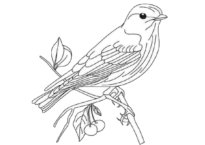 Bird Coloring Pages for Adults Concept Adult Coloring Pages Birds ... | 595x842