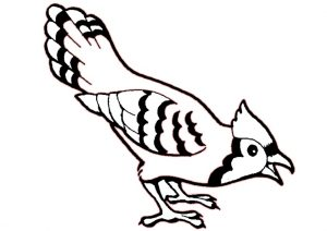 Printable Blue Jay Bird Coloring Pages