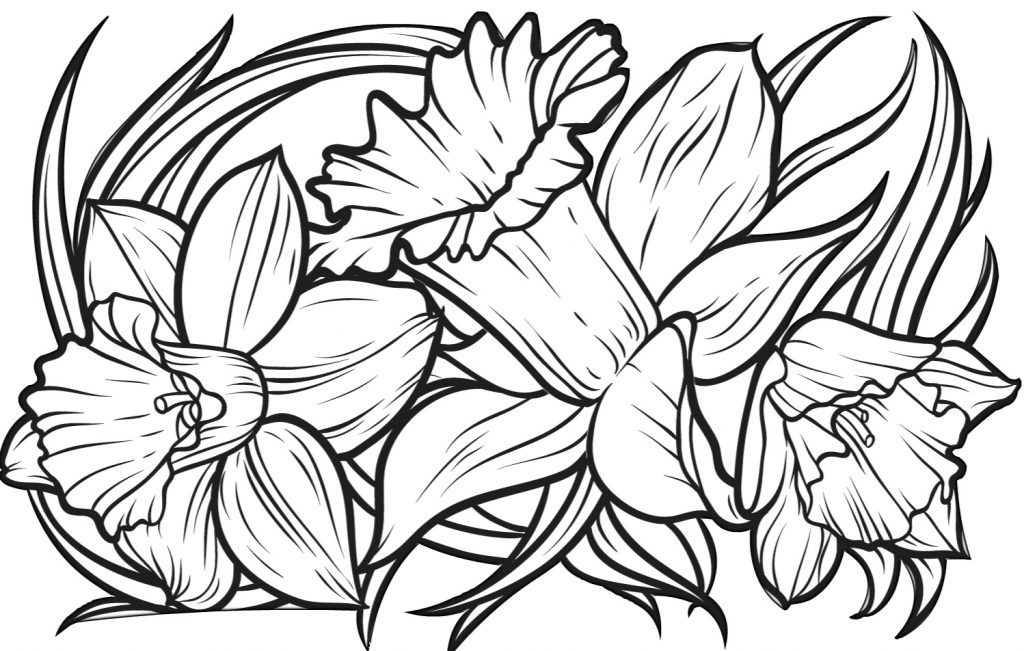 Printable Daffodil Coloring Pages for Adults Print Color