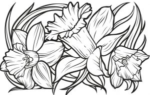 Printable Daffodil Coloring Pages for Adults