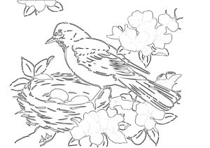 Robin Birds Nest Coloring Pages