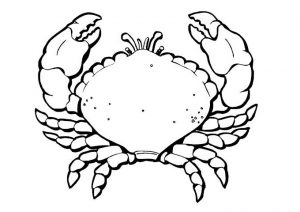 Free Printable Summer Crab Coloring Pages