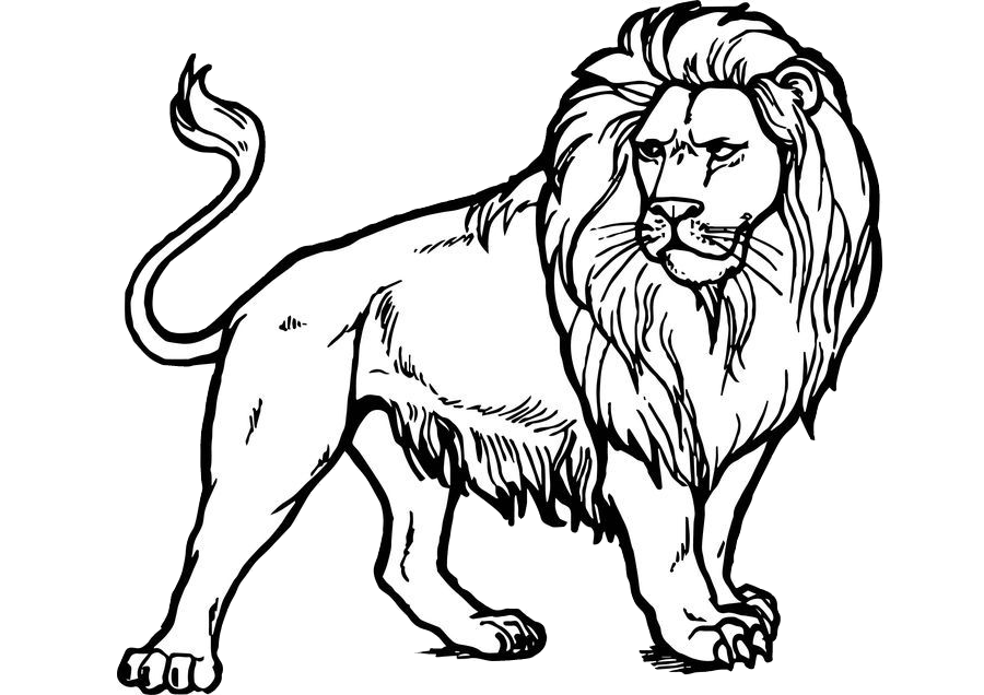 Majestic and Realistic Looking Lion Coloring Pages Print and Color