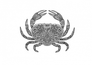 Mandala Crab Coloring Pages Stress Busting Mandala Flowers Crab Coloring Pages