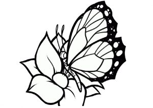 Flowers and Butterfly Coloring Pages