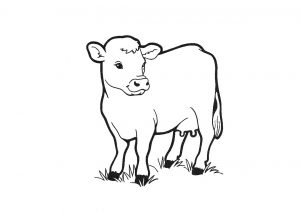 Innocent and Humble Cow Coloring Pages