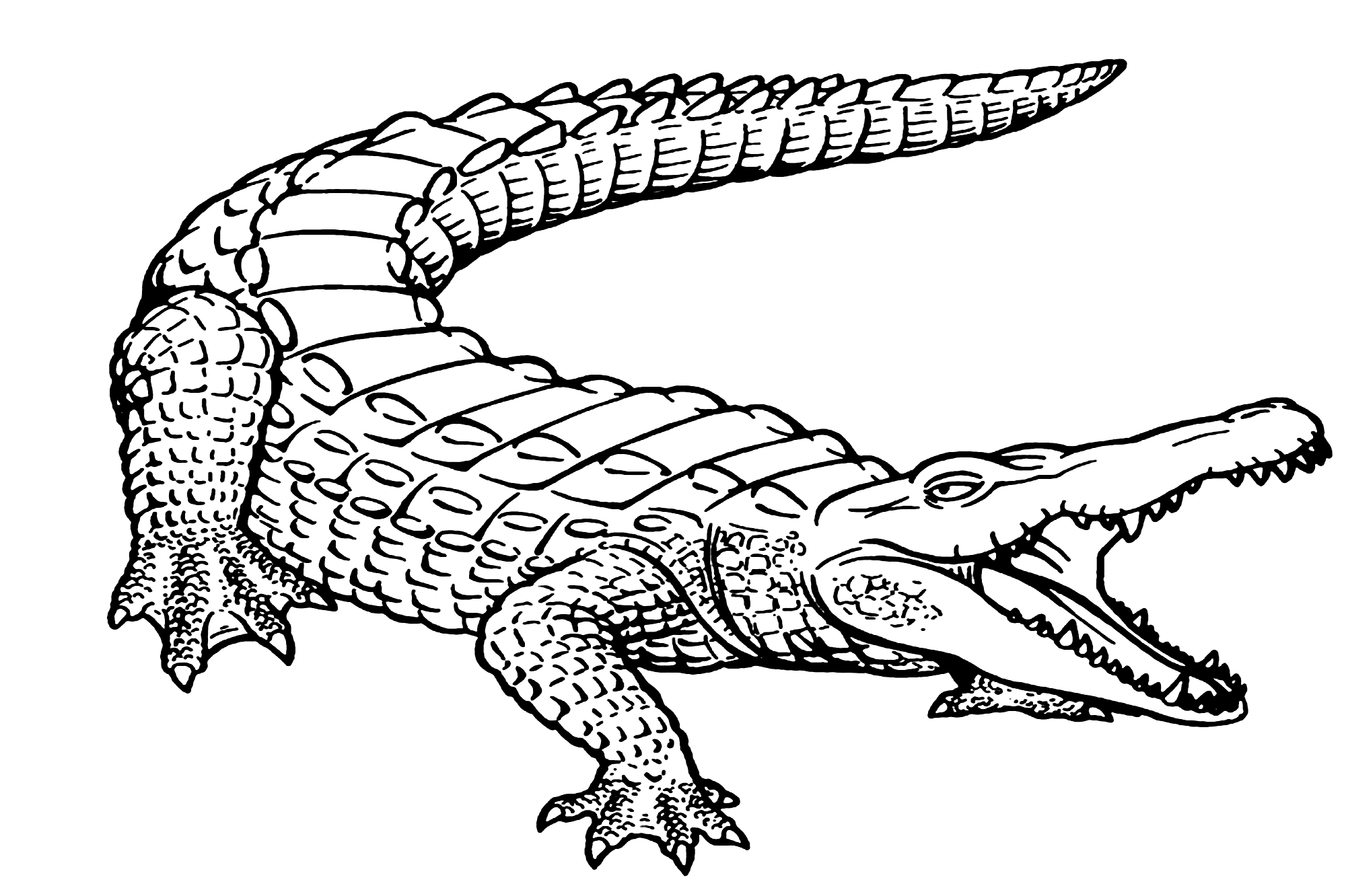Printable Alligator Coloring Page for Preschool Coloring
