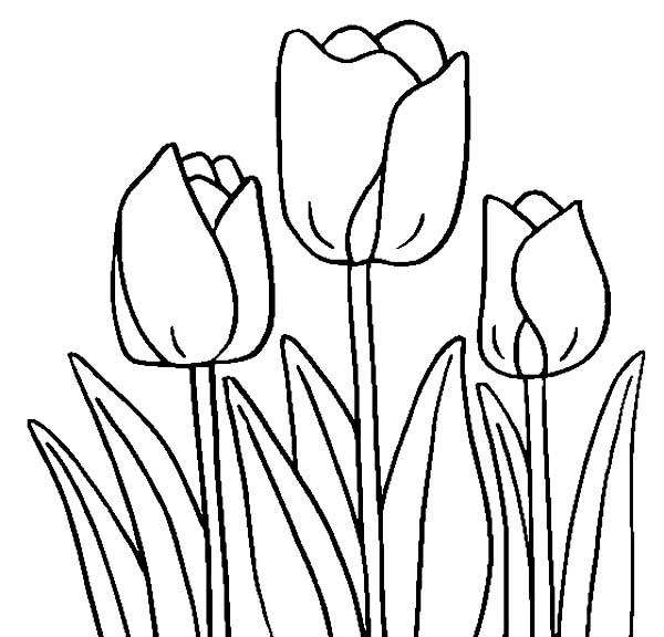 Tulips coloring pages (1)