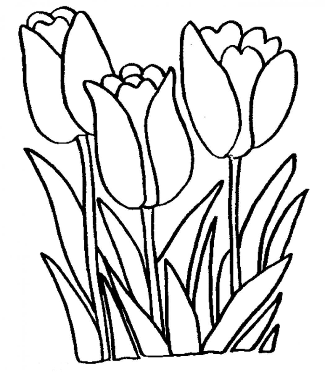 Tulips coloring pages (2)
