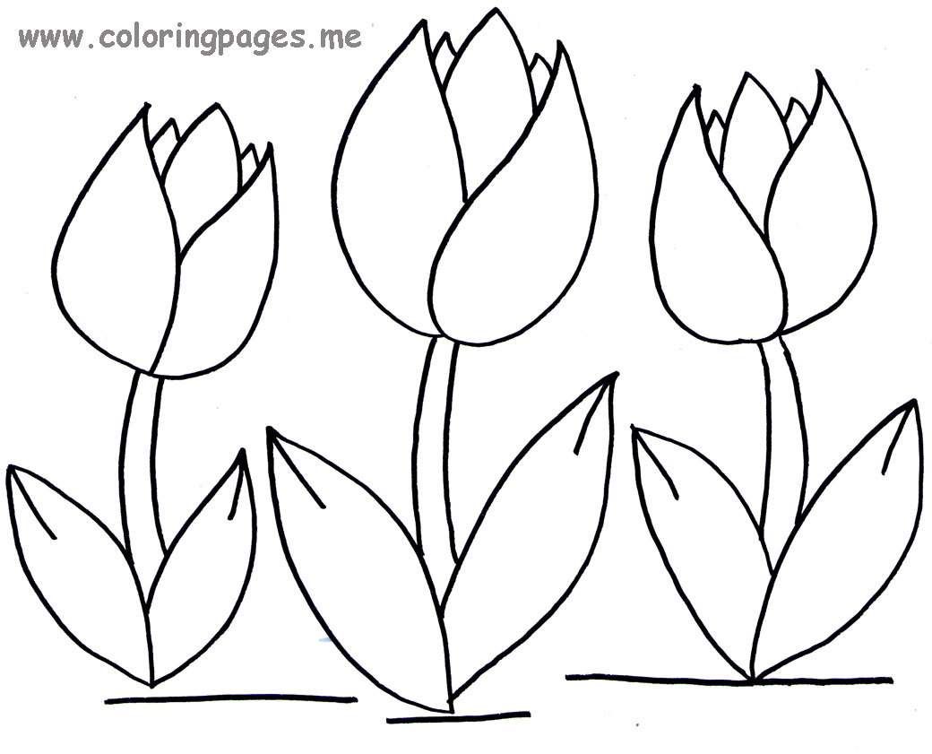Tulips flowers coloring pages and
