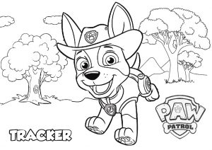New Pup Paw Patrol Jungle Tracker Coloring Pages